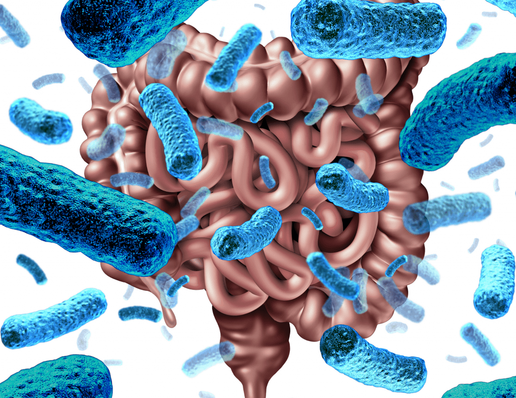 Microbiome and Gut Health